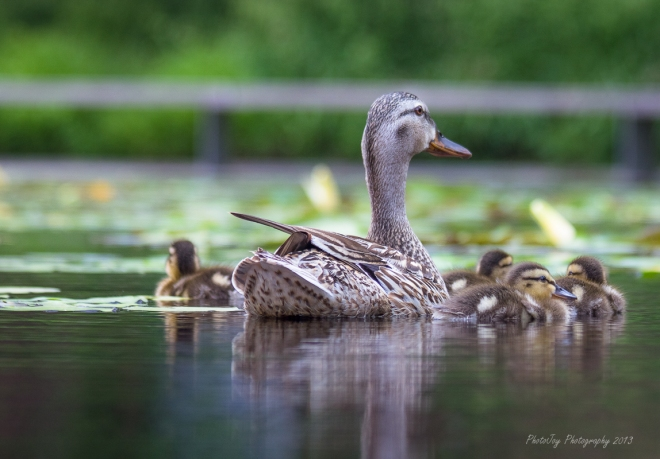 Duck Day-1-18