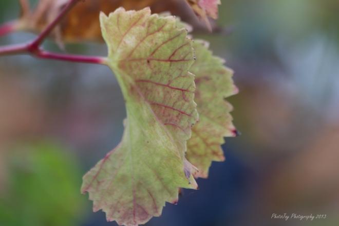 Very Early Fall-1-29
