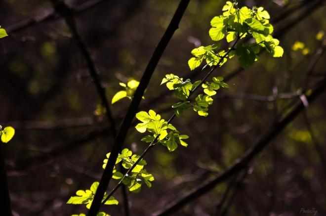 Spring-1-22