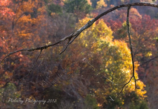 2012 Landscape and Nature (28)